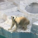 天王寺動物園に行ってみたよ!一番人気の動物はあの動物!